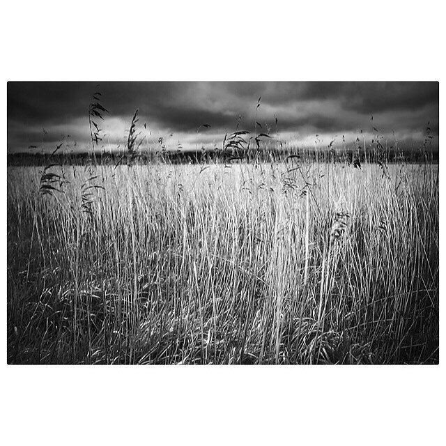 Grasses II ...... only took two shots on my estuary walk and this was the second one.... #exeestuary #grasses #landscapephotography #blackandwhite #myexposureedit
