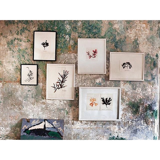 A pic from one of my all time favourite house shoots for @countrylivinguk of the lovely Julia Bird's Cornish farmhouse. Check out www.molesworthandbird.com for hand pressed seaweed art prints & gifts @molesworthy @juliambird .